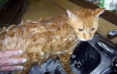 buddys-bath-010.jpg